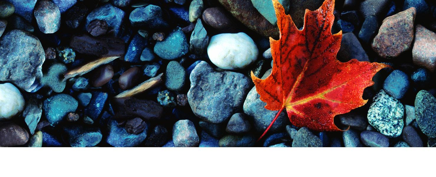 homepage-slide-leaf